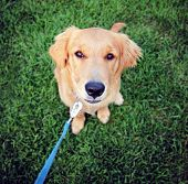 image of spayed  -  a cute dog in the grass at a park during summer  - JPG