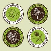stock photo of arjuna  - Set of Natural Organic Product badges - JPG