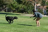 picture of enticing  - She entices the dog with a yummy treat - JPG