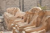 picture of ram  - Avenue of the ram - JPG