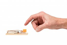 stock photo of mouse trap  - Male finger about to poke a large piece of cheddar cheese placed as bait in a mouse trap - JPG