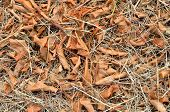 pic of dry grass  - Forest cover with fallen brown leaf on dried grass - JPG