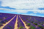 stock photo of plateau  - Stunning landscape with lavender field under morning light - JPG