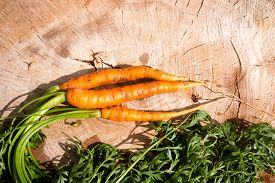pic of dangling a carrot  - Fresh dug carrots on a tree stump - JPG