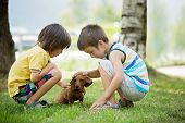Two Beautiful Preschool Children, Boy Brothers, Playing With Little Pet Dog In The Park poster