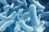 stock photo of microorganisms  - illustration of the bacillus microorganisms - JPG