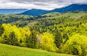 Forest On A Mountain Hillside In Rural Area poster