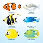 stock photo of damselfish  - Tropical reef fish collection  - JPG