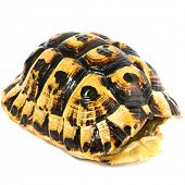 foto of turtle shell  - turtle shell on white background - JPG