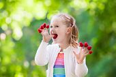 Child Picking And Eating Raspberry In Summer poster