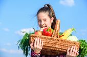 Harvest Festival Concept. Childhood In Countryside. Kid Farmer With Harvest Blue Sky Background. Gir poster
