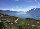 Panorama From Rural Road On Great Lake With Vineyards, Great Blue Sky With Lake And Mountains, Big L poster