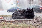 Homeless Black Cat Sleeping Under The Snow poster