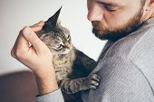 Close-up Of Cat And Man. Portrait Of A Devon Rex Cat And Young Beard Guy. Handsome Animal-lover Man  poster