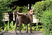 Dog, Dogs Dermatitis, Stray Dogs, Dog Looking poster