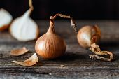 Fresh Onions On Rustic Wooden Background. Onions Background. Ripe Onions. poster