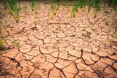 Arid Landscape Cracked Ground Dry Land During The Dry Season In Rice Field Agriculture Area Natural  poster