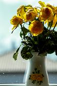 Wilted Yellow Roses In Vase In Window Light. Vase With Yellow Roses. Flowers At The Window. Yellow R poster