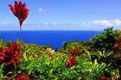 image of garden eden  - Captured at the beautiful Garden Of Eden on the road to Hana - JPG