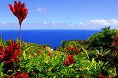 stock photo of garden eden  - Captured at the beautiful Garden Of Eden on the road to Hana - JPG