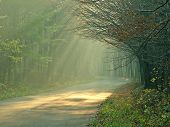 image of sun rays  - sunbeam in forest  - JPG