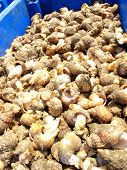 pic of whelk  - An image showing a box of freshly caught Whelks - JPG