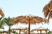 Beach Parasols - Egypt