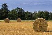 picture of threshing  - Agricultural landscape of corn field and threshed hay bales - JPG