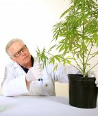 Постер, плакат: Doctor Sativa a board certified Medical Marijuana Doctor explains the Medical Benefits of Medical C