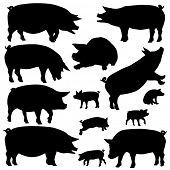 foto of piglet  - Set of editable vector silhouettes of pigs and piglets - JPG