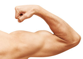 picture of bicep  - Strong male arm shows biceps - JPG