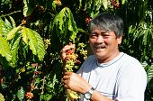 image of coffee crop  - Asian farmer happy with productivity crop Vietnamese man stand at coffee bean plantation cafe is the plant that rich caffeine popular agriculture product at basalt soil highland in Vietnam - JPG