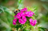 foto of bumble bee  - Big bumble - JPG