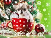 image of christmas puppy  - puppy christmas chihuahua in cup - JPG