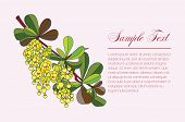 picture of barberry  - Barberry branch with flowers and leaves - JPG