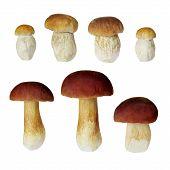 stock photo of boletus edulis  - Set of boletus mushrooms isolated on white background - JPG