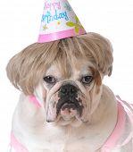 pic of dog birthday  - birthday dog  - JPG
