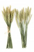 stock photo of bundle  - Wheat ear bundles over a white background - JPG