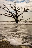 pic of tide  - Mid day during high tide at Botany Bay Beach Boneyard on a warm spring day on Edisto Island - JPG