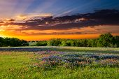 stock photo of indian  - Texas pasture filled with bluebonnets and Indian paintbrushes at sunset - JPG