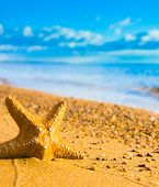 stock photo of starlet  - On a Beach Sea Starlet  - JPG