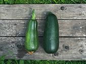 picture of marrow  - Green marrows on a wooden surface in the garden - JPG