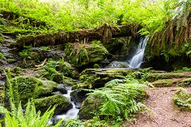 stock photo of fern  - tranquil waterfall running thru ferns and large redwood trees in northern California - JPG