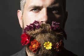 picture of long beard  - Portrait of attractive unshaven man with long beard and hendlebar flowerbed moustache with marigolds flowers orange red and yellow violet purple color on black background horizontal picture - JPG
