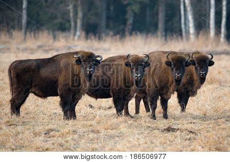A herd of
