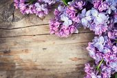Lilac flowers bunch over wood background. Beautiful violet Lilac flower still life border design on  poster