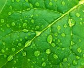 Dew on green leaf. Composition of nature.