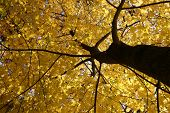 stock photo of fall leaves  - Fall Colors in the Forest - JPG