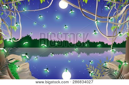 Firefly In The Jungle At