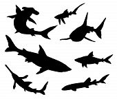 stock photo of guitarfish  - 7 different sharks detailed silhouettes - JPG